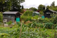Thieves target allotment sheds