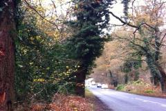 National Trust calls for speed reduction on Macclesfield Road