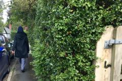 Reader's Letter: Shocking state of hedges and pavements
