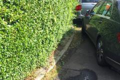 Overgrown hedges force pedestrians onto the road