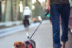 Zero dog fouling fines in past year