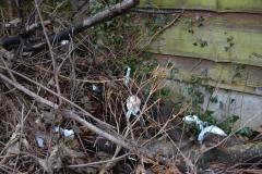 Bags of dog waste dumped in bushes