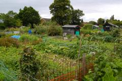 Allotment waste is a burning issue