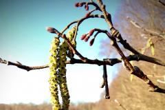 Reader's Photos: Spring is in the air