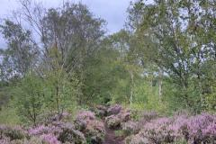 Reader's Photo: Heather on Lindow Moss