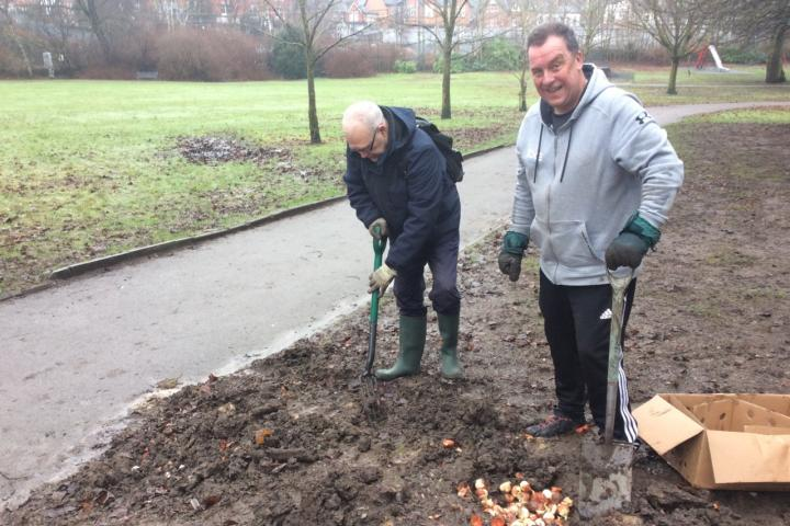 Join blooming great effort to plant 20,000 bulbs